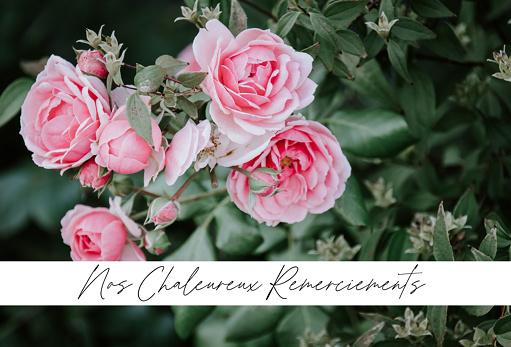 Remerciements condoléances roses